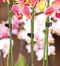 Klips na orchideu, 10 x
