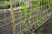 Jutová sieť na ťahavé rastliny / 6030443