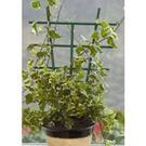 Podpera rastlín,  28 x 17 cm, 2 kusy / 5020202