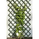 Mreža drevená zelená / 6041706