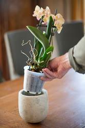 Kvetináč na orchideu priesvitný