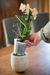 Kvetináč na orchideu priesvitný / 6071102